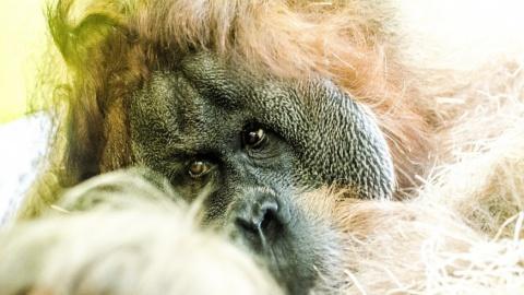 Oplev Borneos fantastiske dyreliv på denne singlerejse